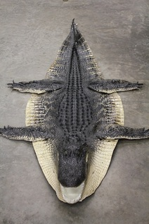 Alligator Rugs 250 Per Ft